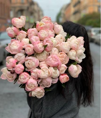 Пион Гардения (Gardenia)